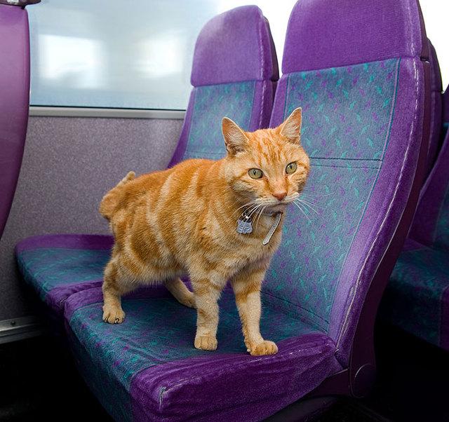 gato_dodger_viaja_en_bus_3