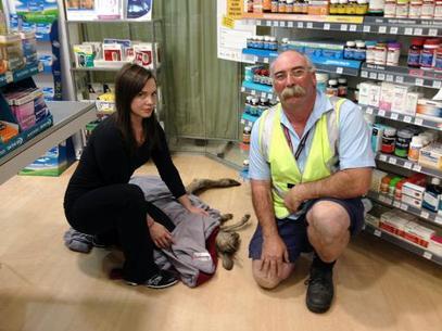 canguro-aeropuerto-australia