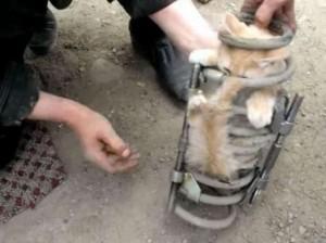 gato_suspension2