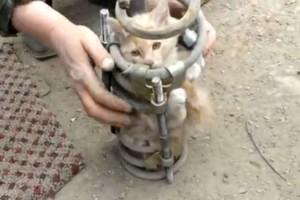 gato_suspension3