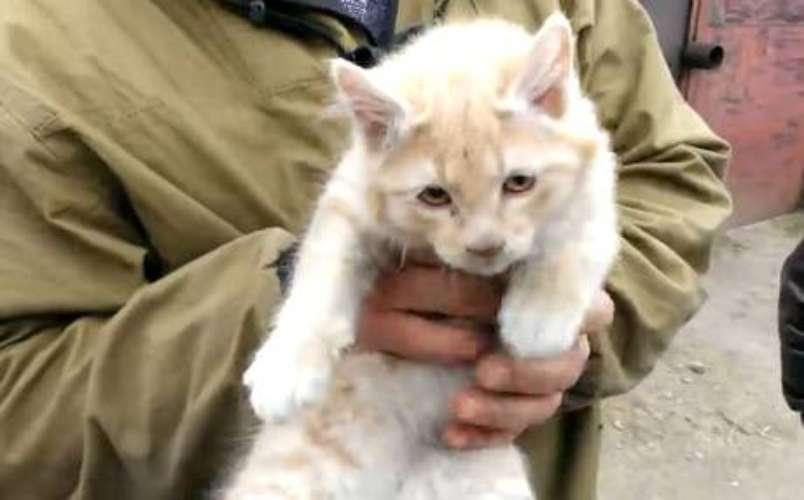 Gato viaja atrapado en la suspensión de un vehículo