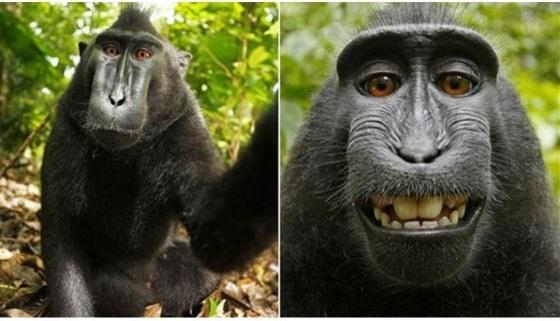 selfie_macaco_negro_crestado
