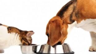 gato_perro_comiendo