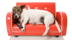 perro-television