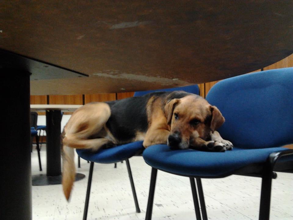 sir-perro-biblioteca