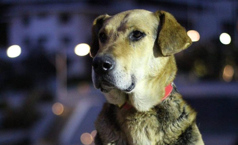 sir-perro
