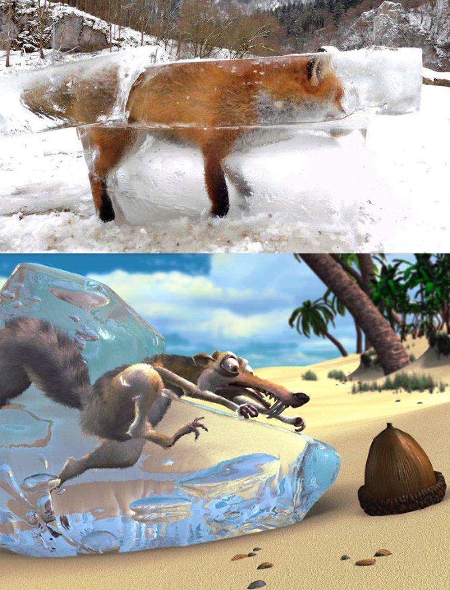 zorro-congelado-4