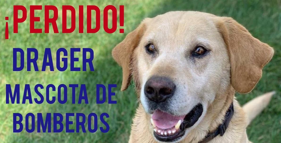 drager-perro-bombero-crop