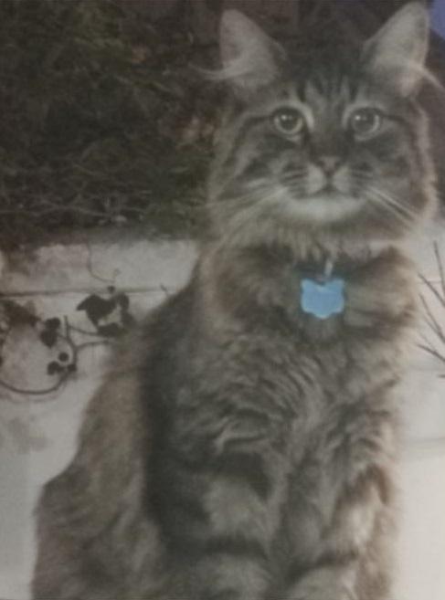 gato-perdido-loki