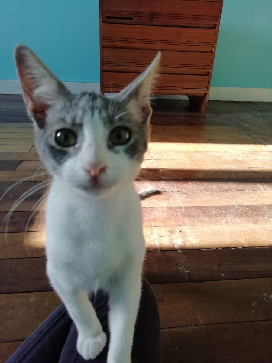 gato-valpo1